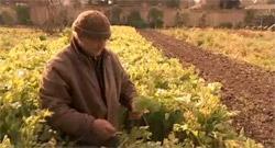 Food Fight Documentary